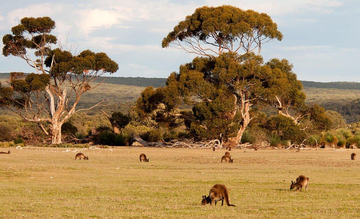 Najdziwniejsze fakty o Australii. Tego na pewno nie wiesz!