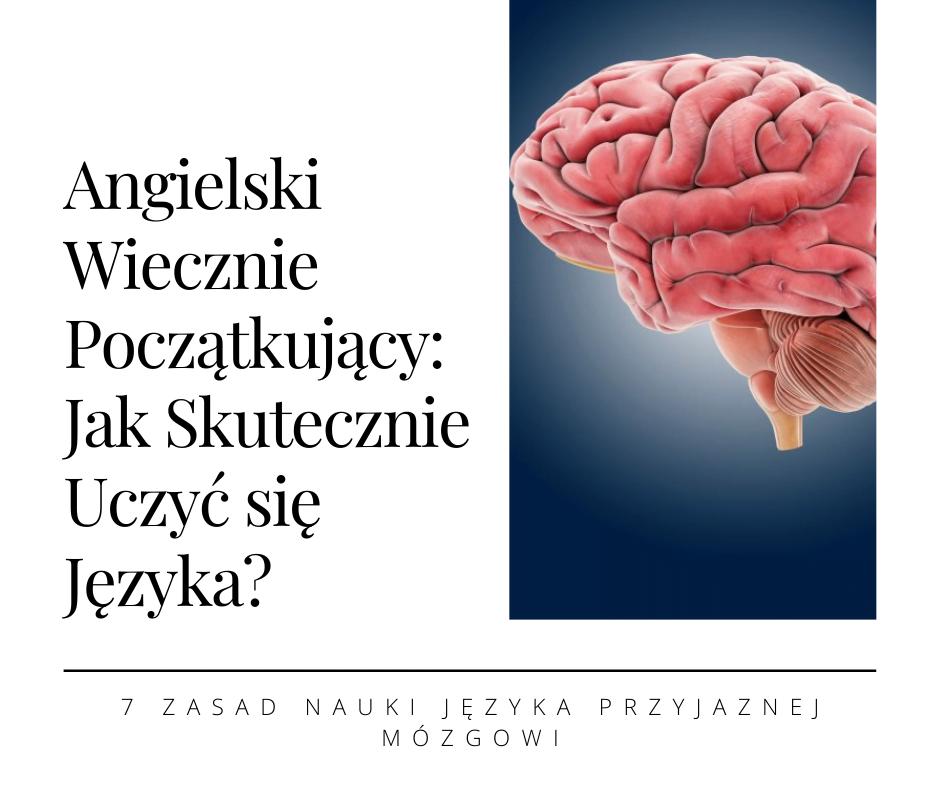 Jak szybko nauczyć się angielskiego wykorzystując potencjał swojego mózgu?
